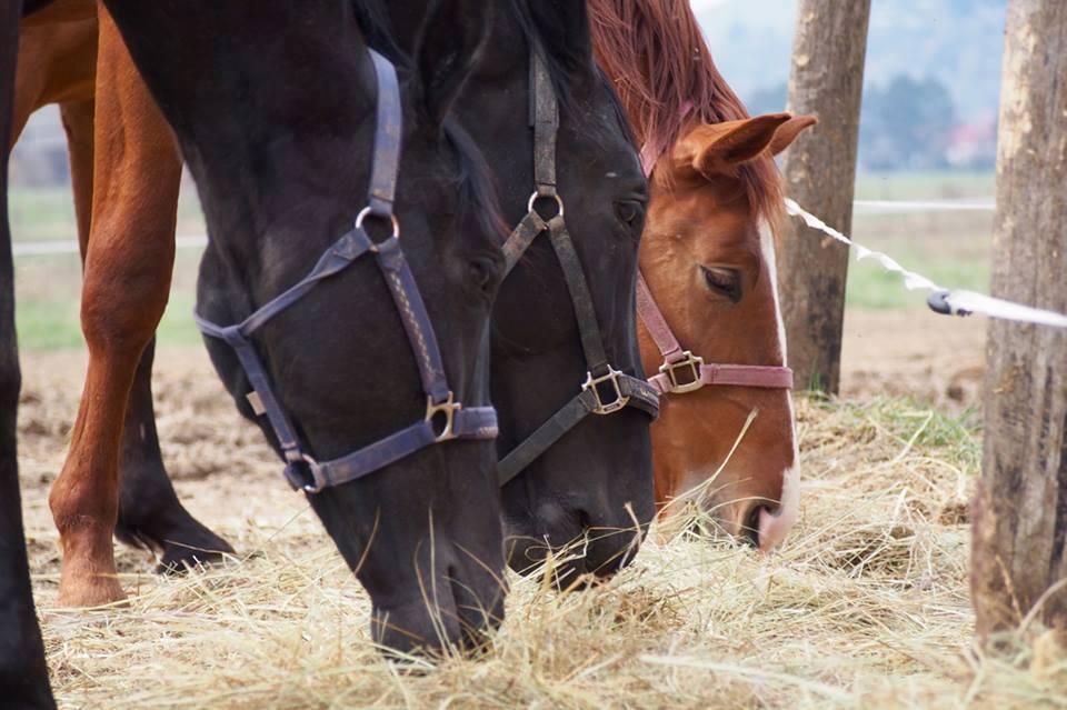 lovak kedves